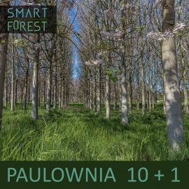 Paulownia [05.2020] 10 pcs (+1 gratis)